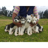 Husky Envios A Todo El Pais