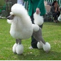 Rasuradoras Caninas Andis Peluquería Pet Shop