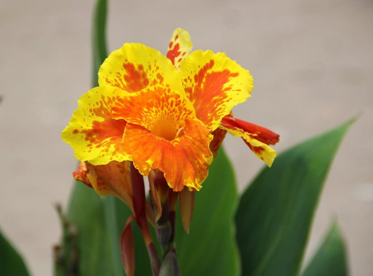 Semillas de plantas ornamentales u s 5 00 en mercadolibre for Algunas plantas ornamentales