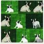Excelentes Ejemplares, Bulldog Francés.....,,,,, | YOCE8186056